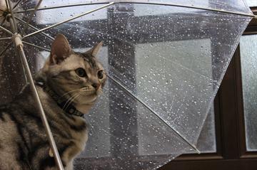 cat_prize_4.JPG
